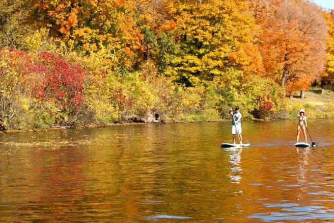 Two people paddle boarding against fall trees