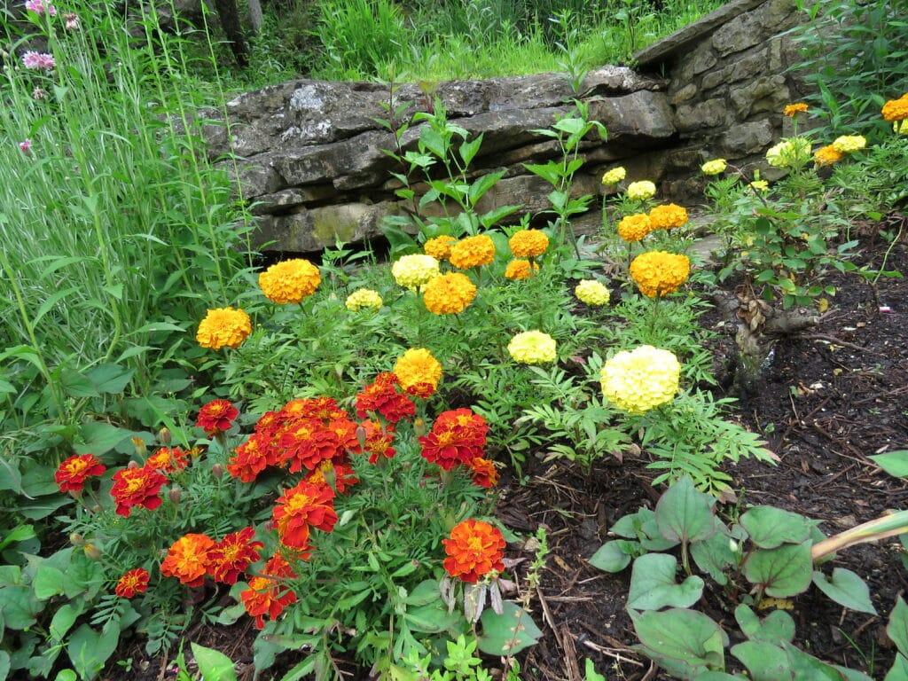 Flowers yellow and orange growing around the rocks around magnetic spring
